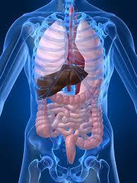 l'évacuation des toxines : rôle des organes